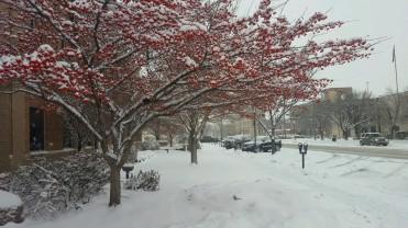 snow-at-city-hall